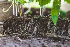 Semina giardino